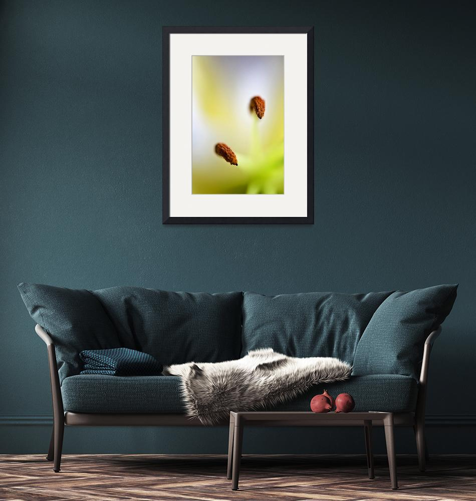 """""""Lily""""  (2010) by maxblack"""