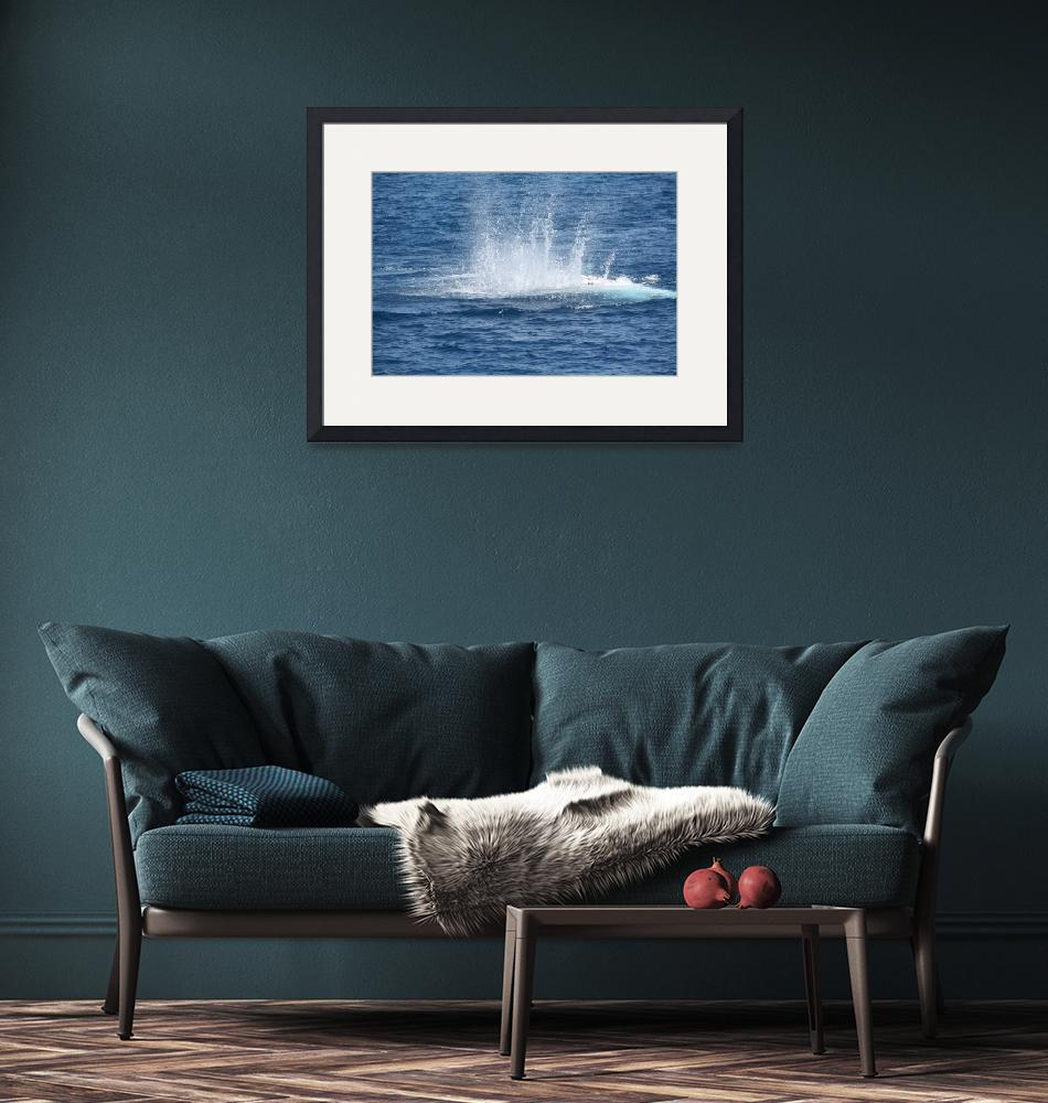 """""""NaP_ Whale Watching129""""  by nevilleprosser"""