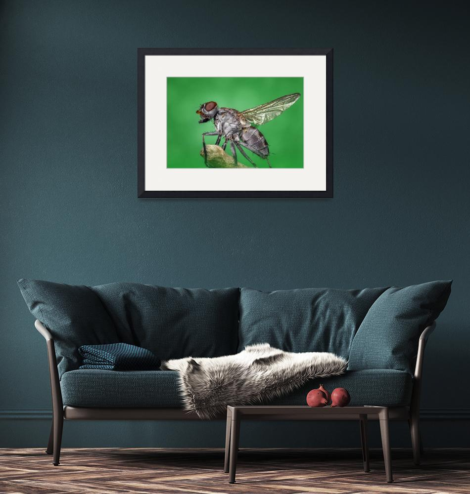 """""""Thorne Wildlife Collection Framed Print""""  by buddakats1"""