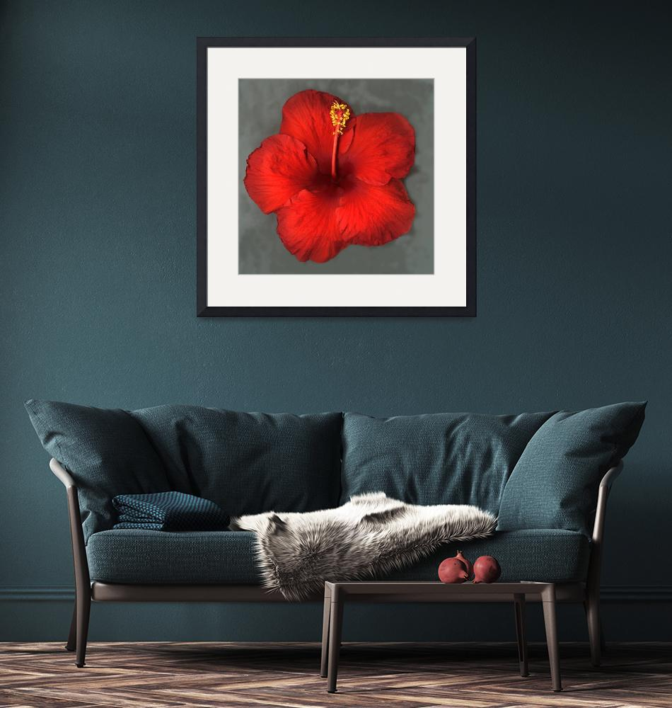 """""""Red Hibiscus""""  (2015) by modernhouseart"""