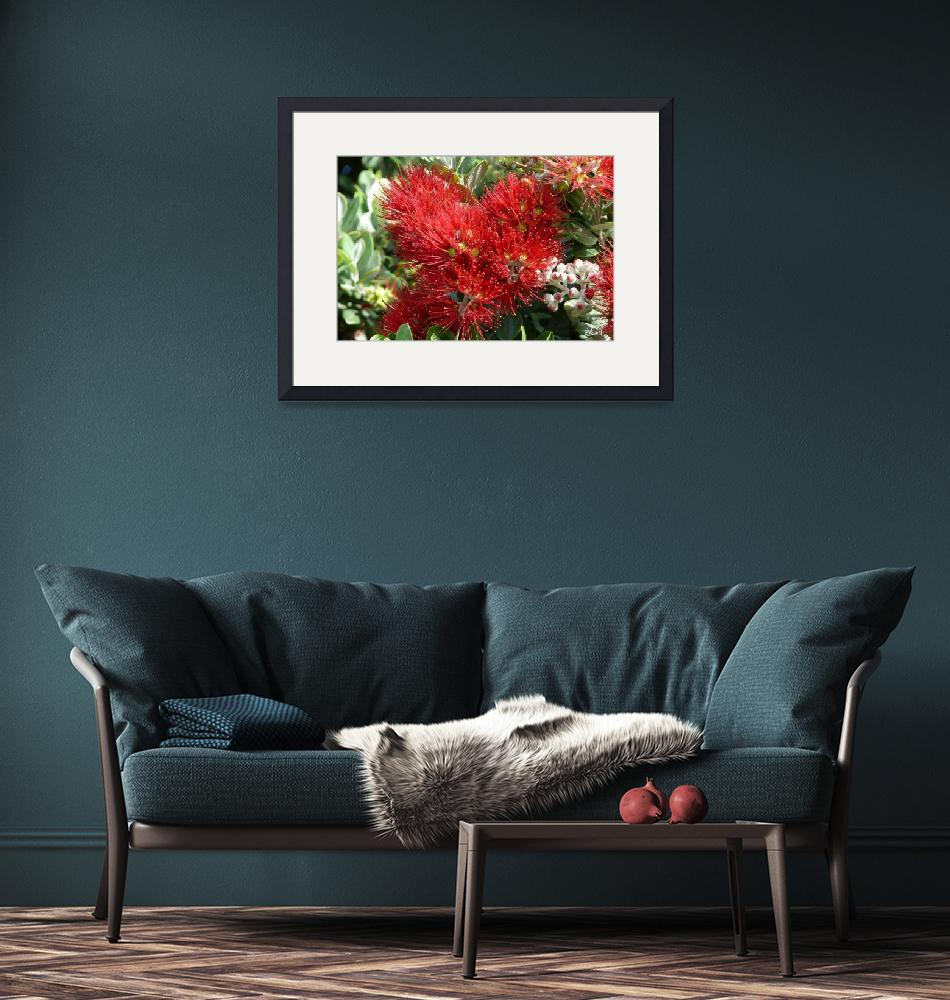 """""""Pōhutukawa in bloom""""  (2008) by nathanw"""