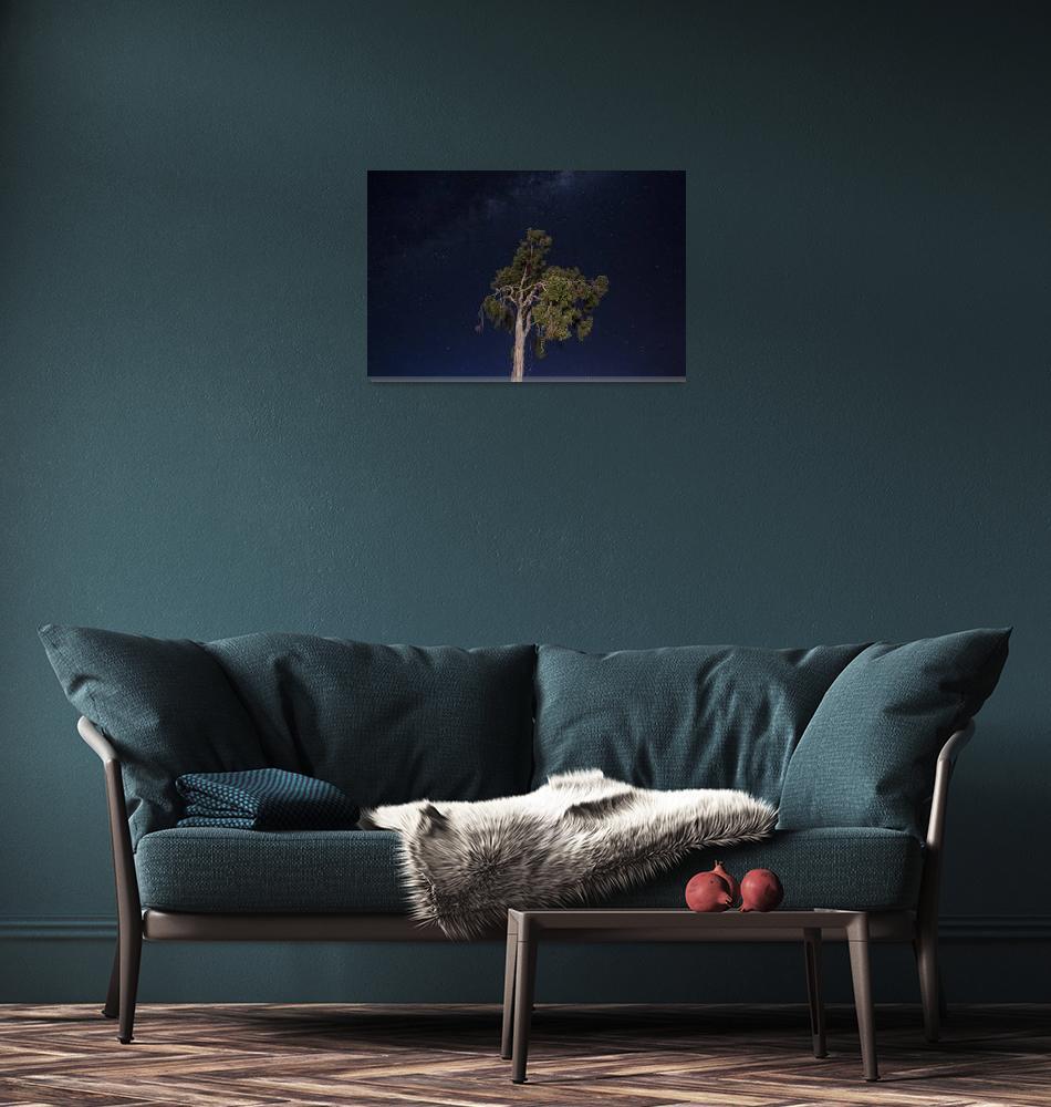 """A single tree beneath the stars""  (2013) by corysmithphotography"