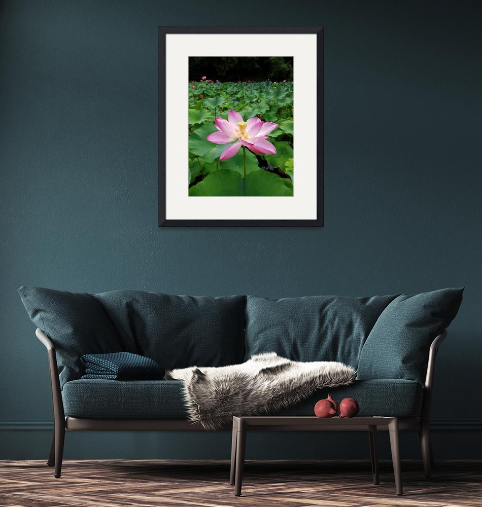 """""""Pink water lilly""""  (2016) by ale_flamy"""