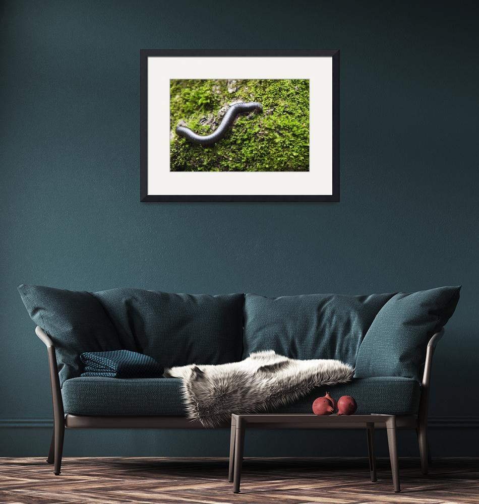 """""""Millipede crawling on moss""""  by Panoramic_Images"""