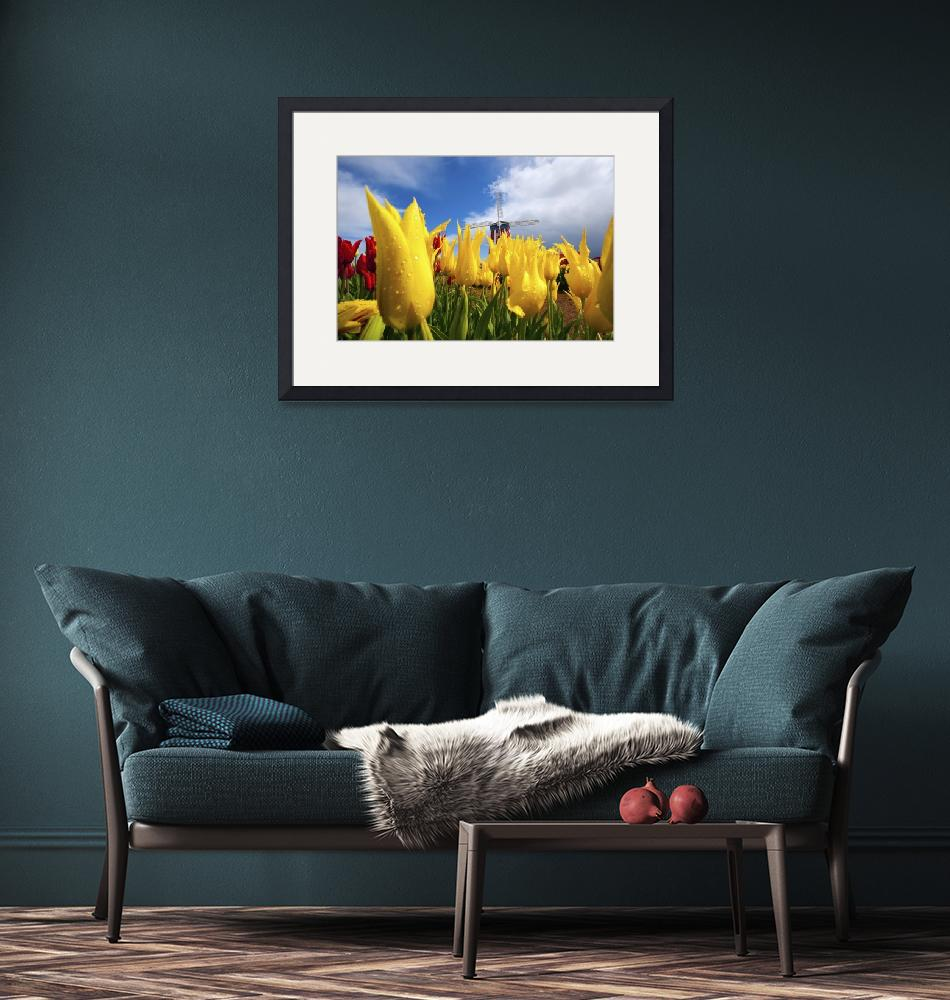 """Tulips In A Field And A Windmill At Wooden Shoe Tu""  by DesignPics"