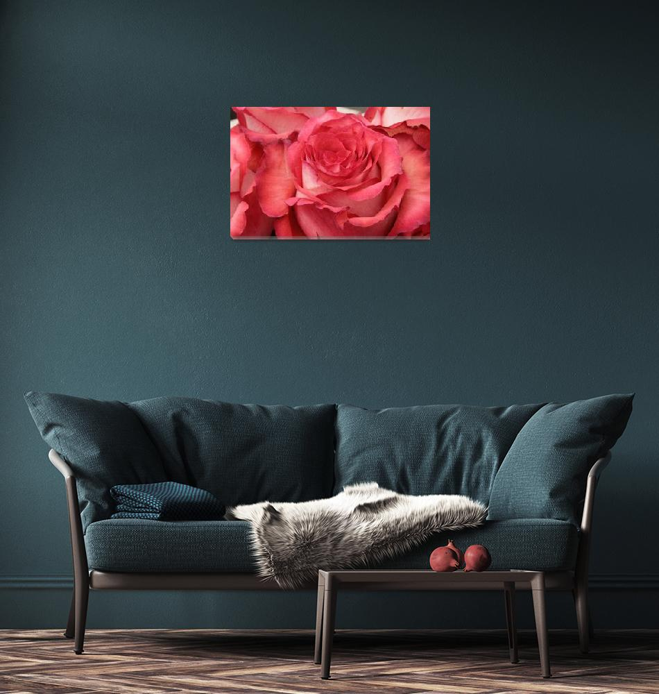 """Red Rose Flower""  (2014) by rhamm"