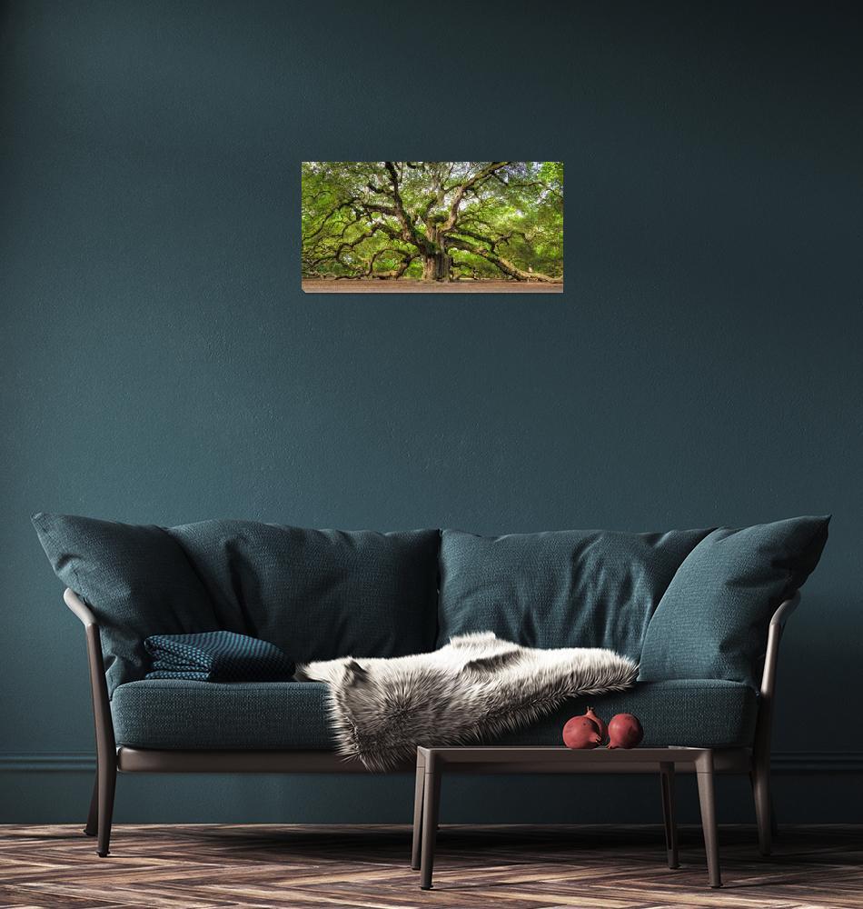 """Angel Oak Tree Charleston SC ""Omnipotent""""  (2011) by DustinKRyan"