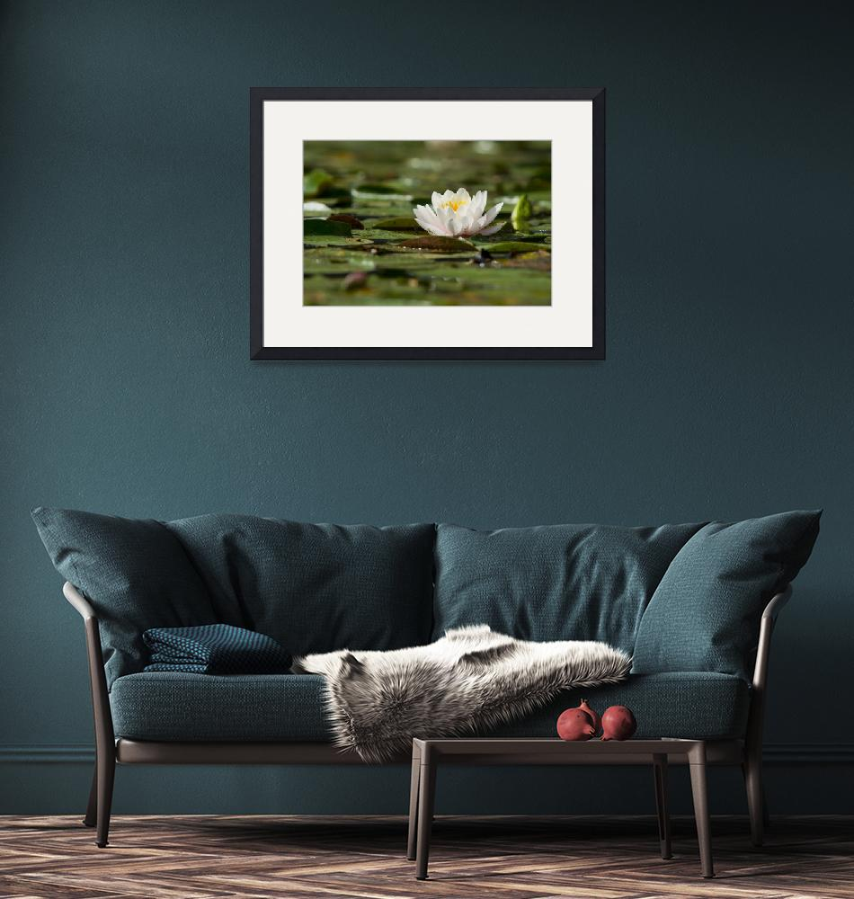 """""""Water Lily""""  (2012) by LarryBohlin"""