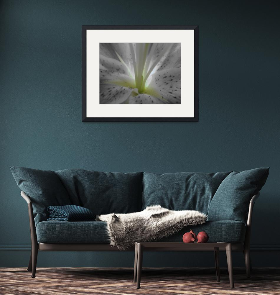 """""""Black and White Lily""""  by Caz"""