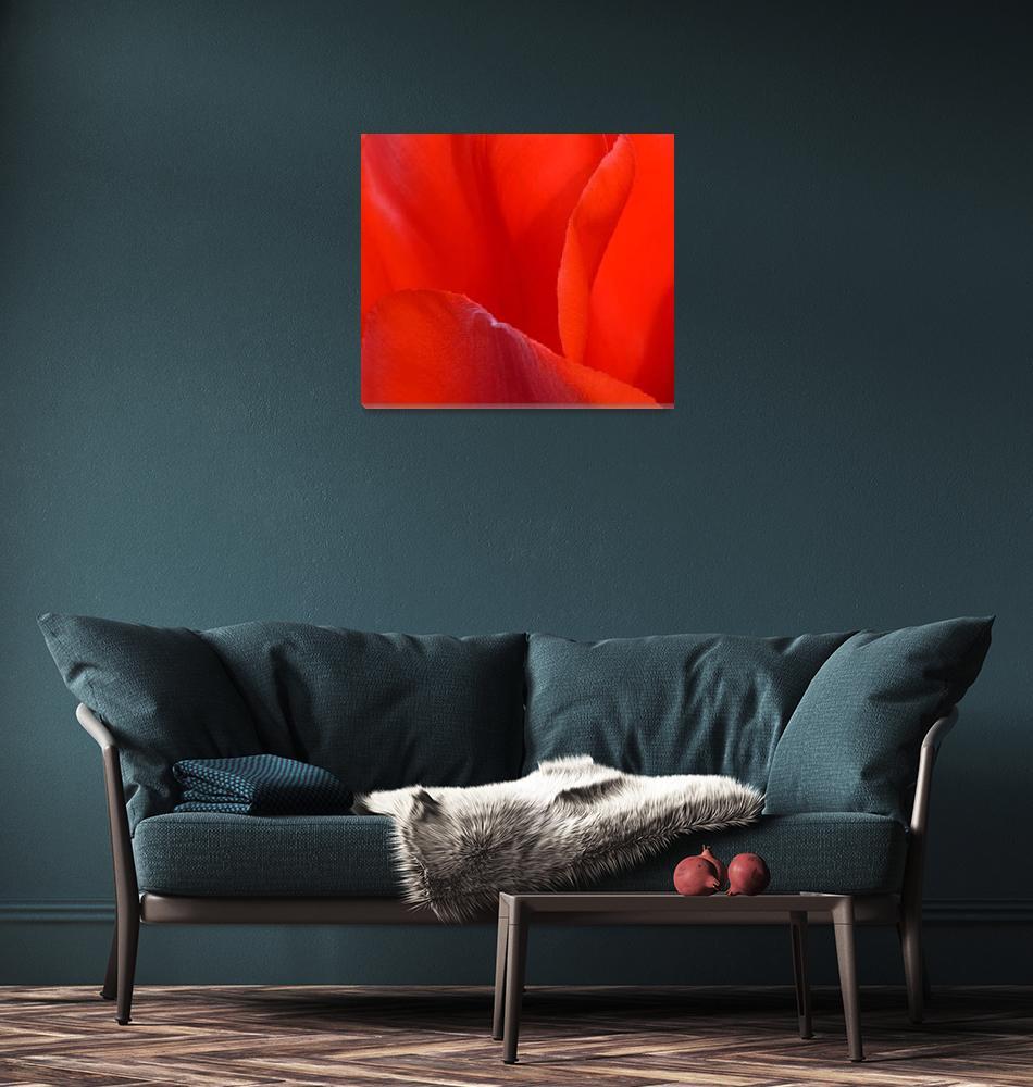 """""Red Tulip 2"" #2042315.0676 (2)""  (2015) by achimkrasenbrinkart"