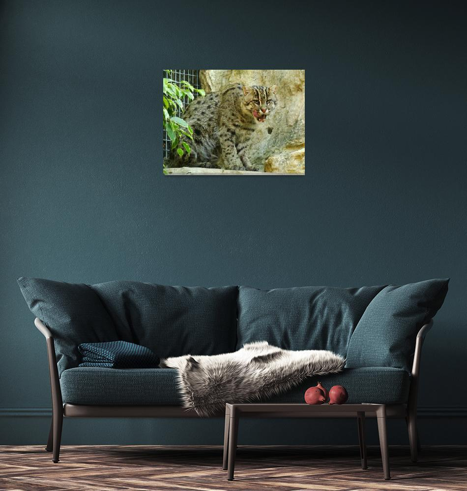 """""""The Fishing Cat""""  (2009) by cleo"""
