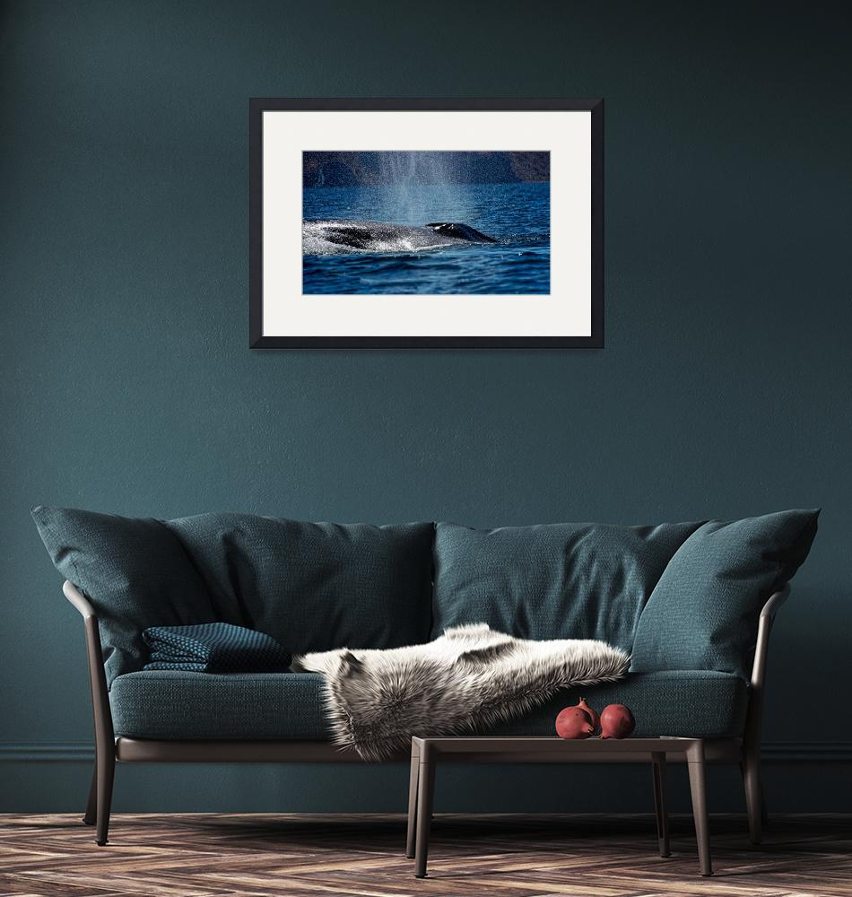 """""""Fin Whale Spouting""""  (2011) by boppintheblues"""