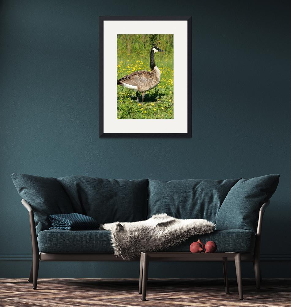 """""""Canada Goose Among Flowers""""  (2013) by rhamm"""