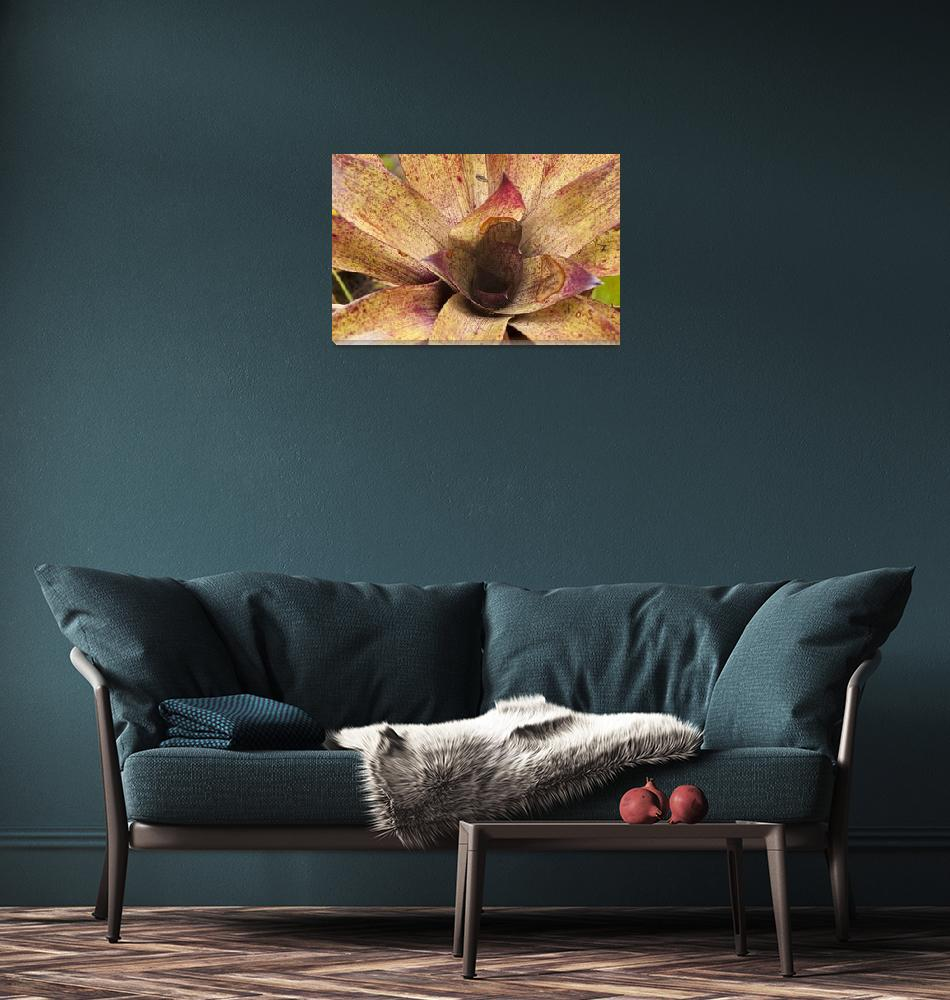 """Giant bromeliad, Ecuador Cloud Forest""  (2009) by SederquistPhotography"