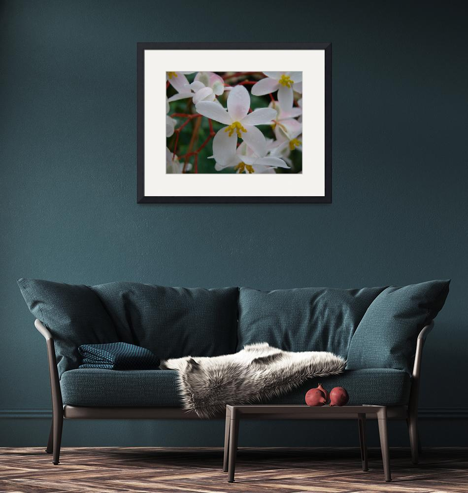 """""""White Flowers""""  (2009) by alymariephotography"""