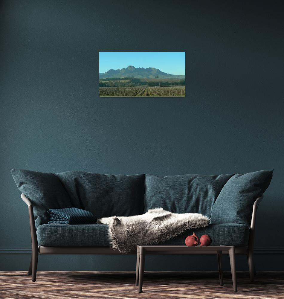 """Cape Winelands- P1140085""  (2013) by rayjacque"