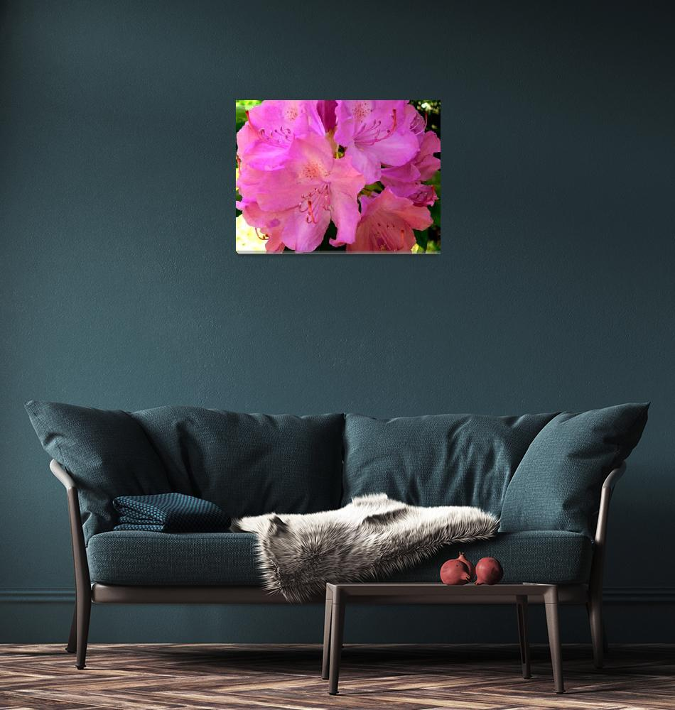 """""""Rhododendron""""  (2008) by rayjacque"""