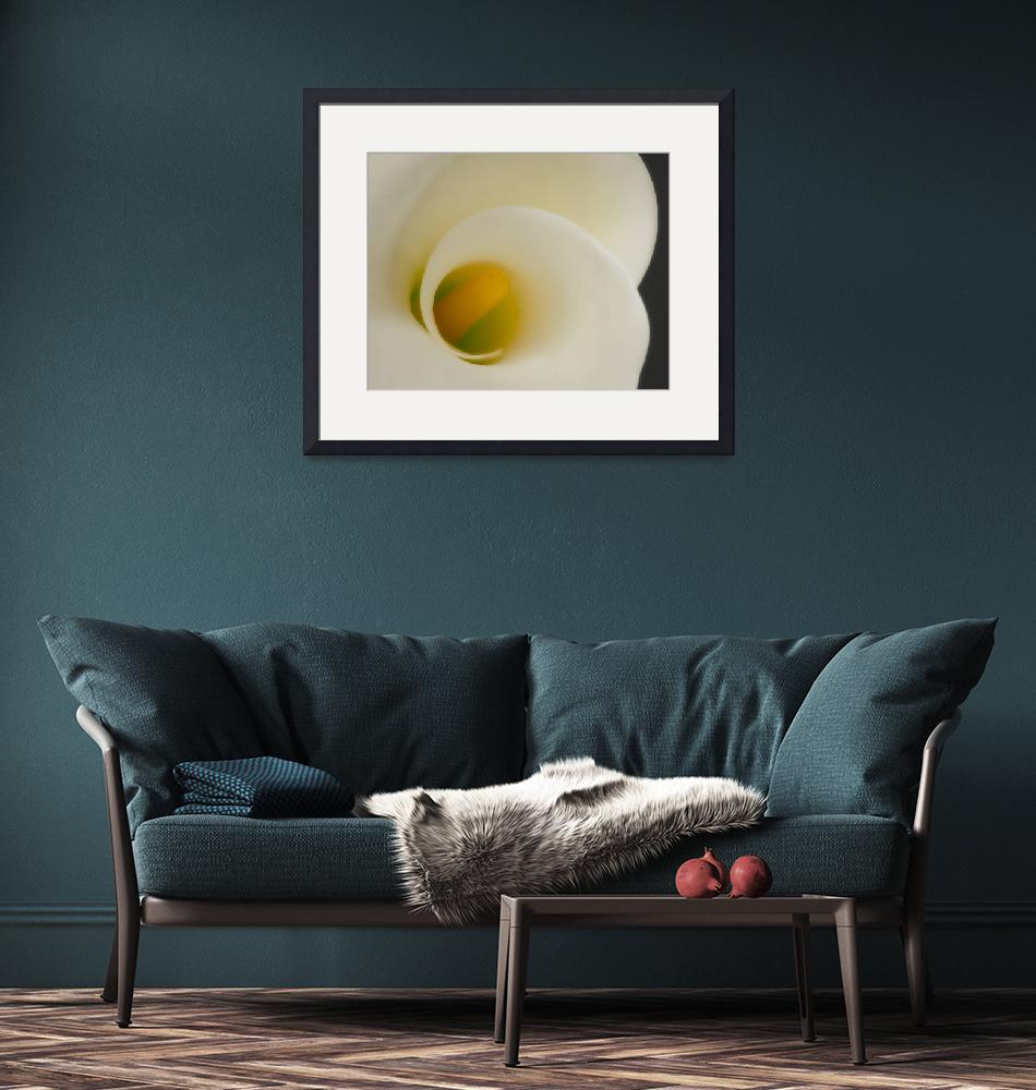 """""""Soft Calla Lily""""  by boppintheblues"""