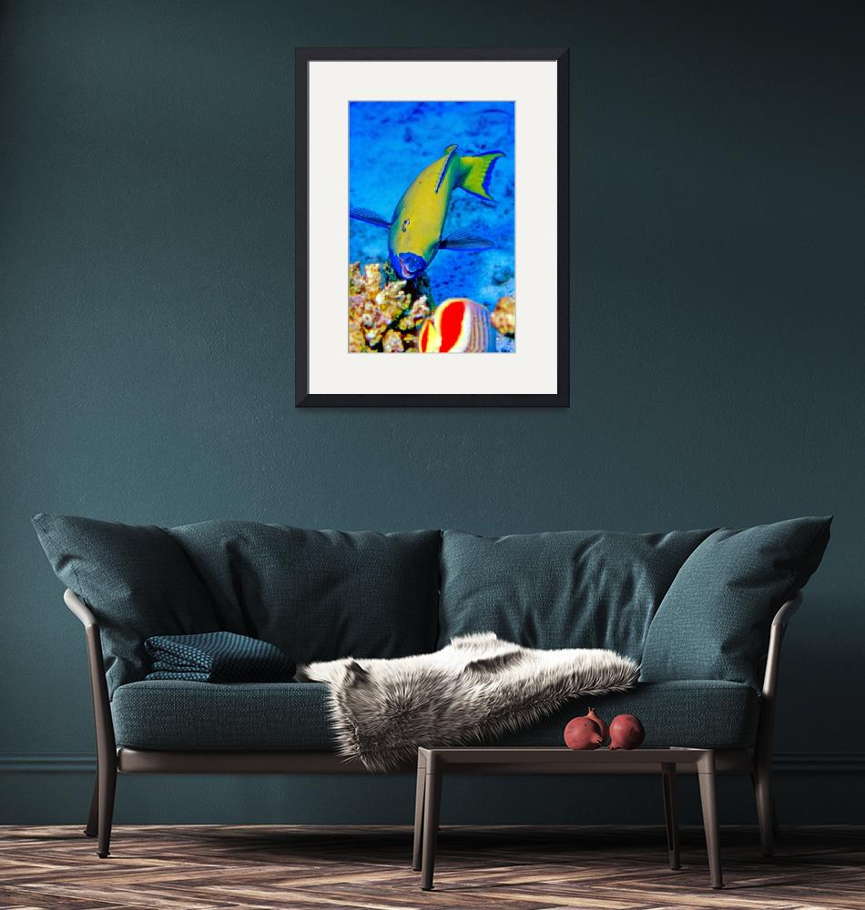 """""""Yellow Parrotfish""""  (1992) by JoaoPonces"""