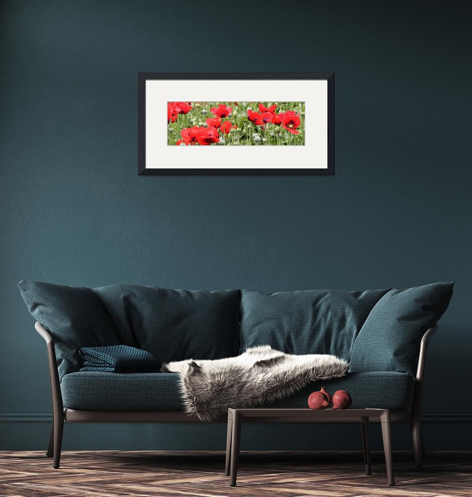 """""""Poppies""""  (2014) by monmoimages"""