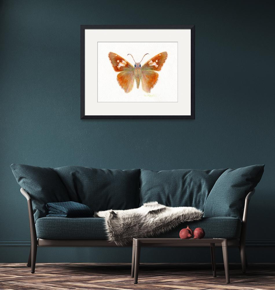 """""""Silver Spotted skipper butterfly""""  (2008) by LisaMclaughlin"""