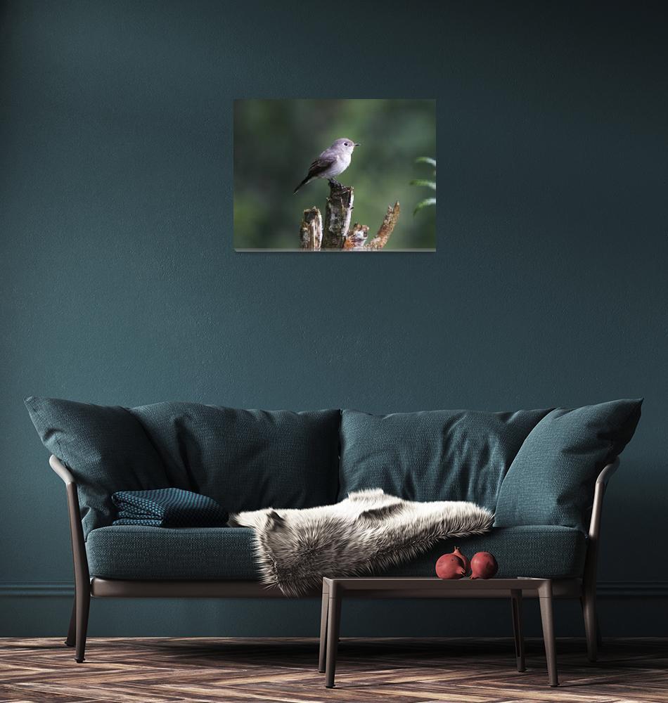 """Asian Brown Flycatcher""  by ChamindaJayaratne"