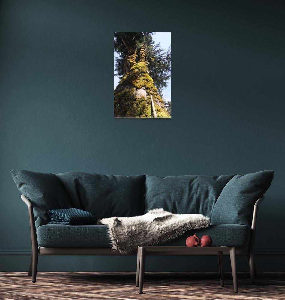 """Tall mossy tree""  by ebonflow"