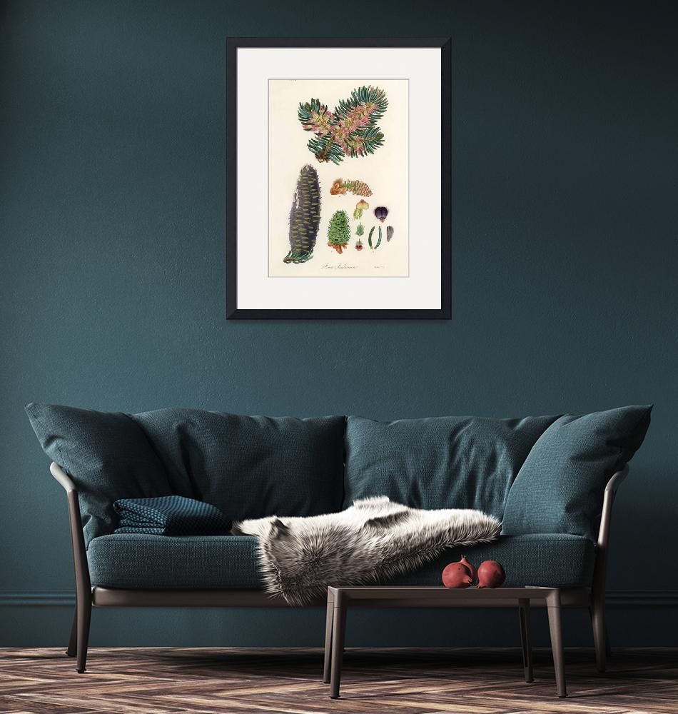 """""""Vintage Botanical Balsam""""  by FineArtClassics"""