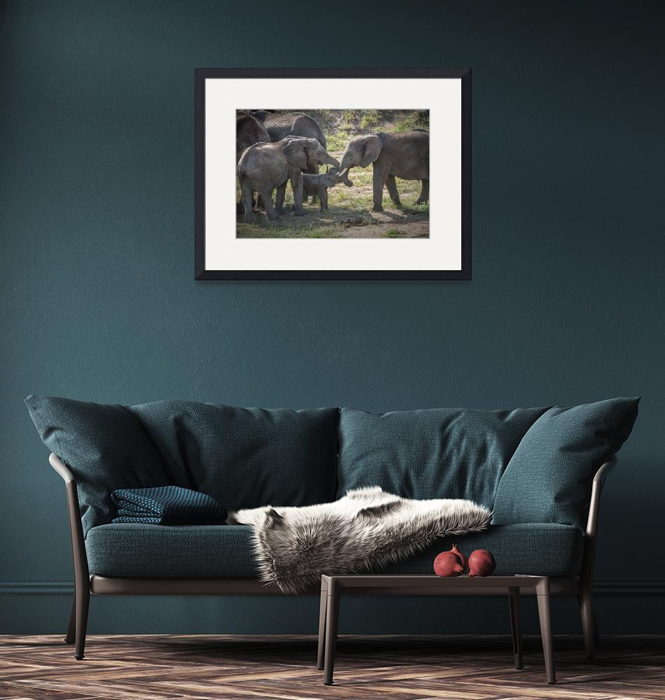 """""""Elephant Family Interaction""""  (2014) by SederquistPhotography"""