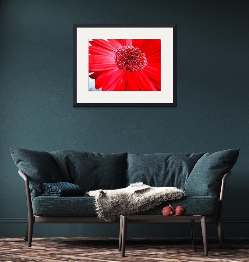 """""""Red Flower"""" (2009) by micspics444"""