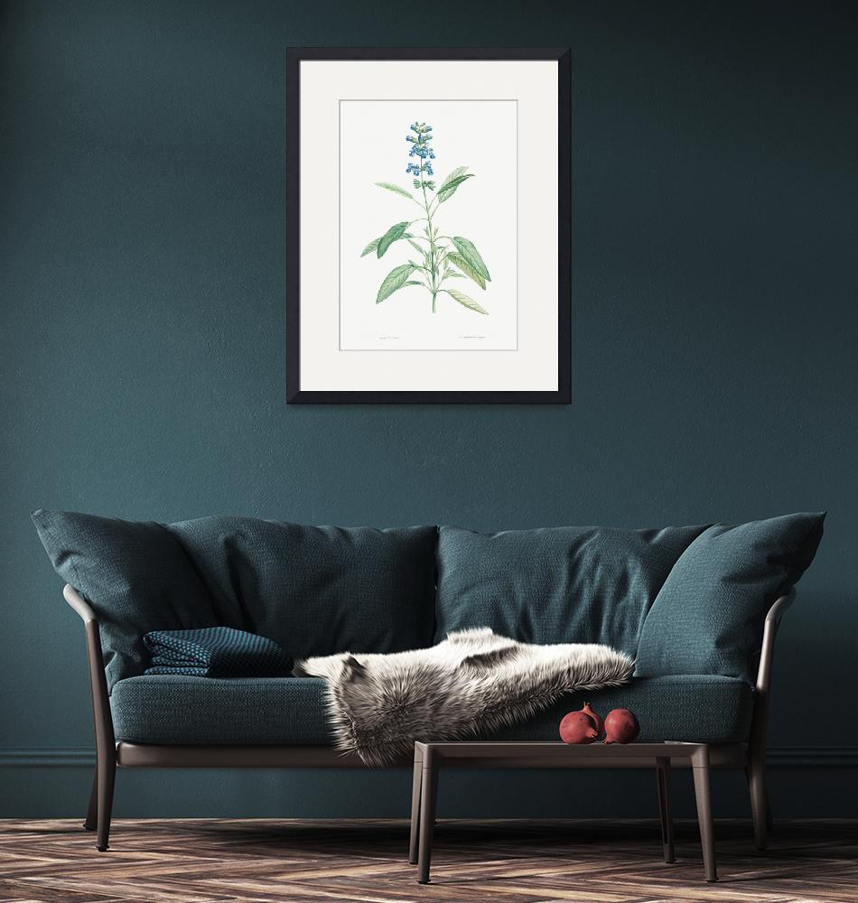 """Sage Vintage Botanical""  by FineArtClassics"