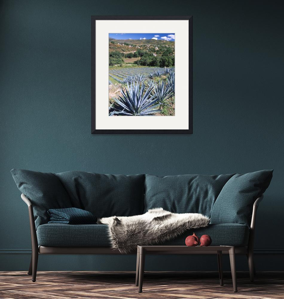 """Tequila Agave Cultivation Mexico""  by Panoramic_Images"