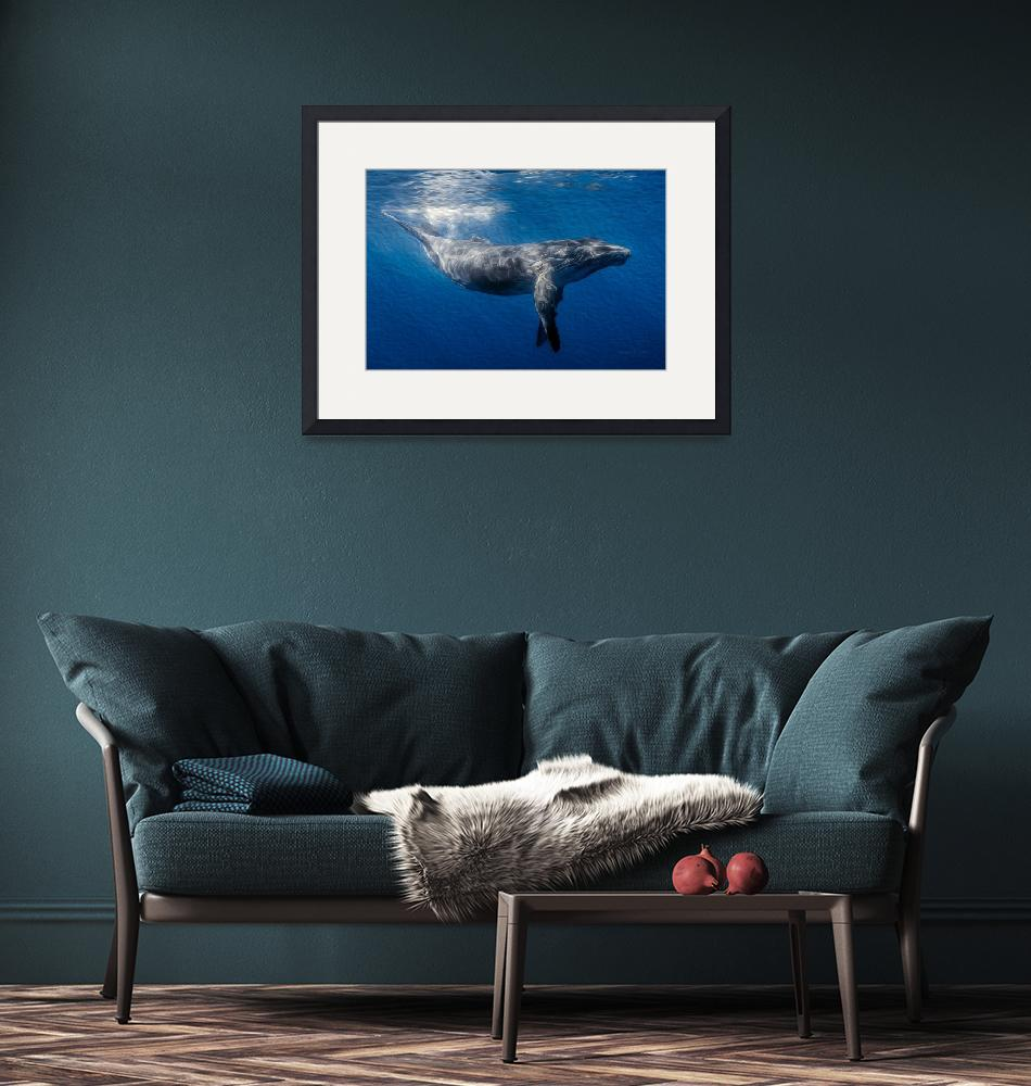 """""""Humpback Whale Under Ocean Surface""""  (2014) by netbrands"""