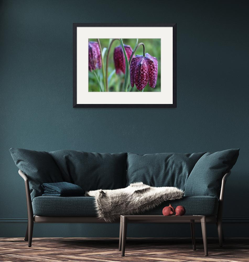"""""""Crimson Purple Checkered Lilies"""" by TheCandidImage"""