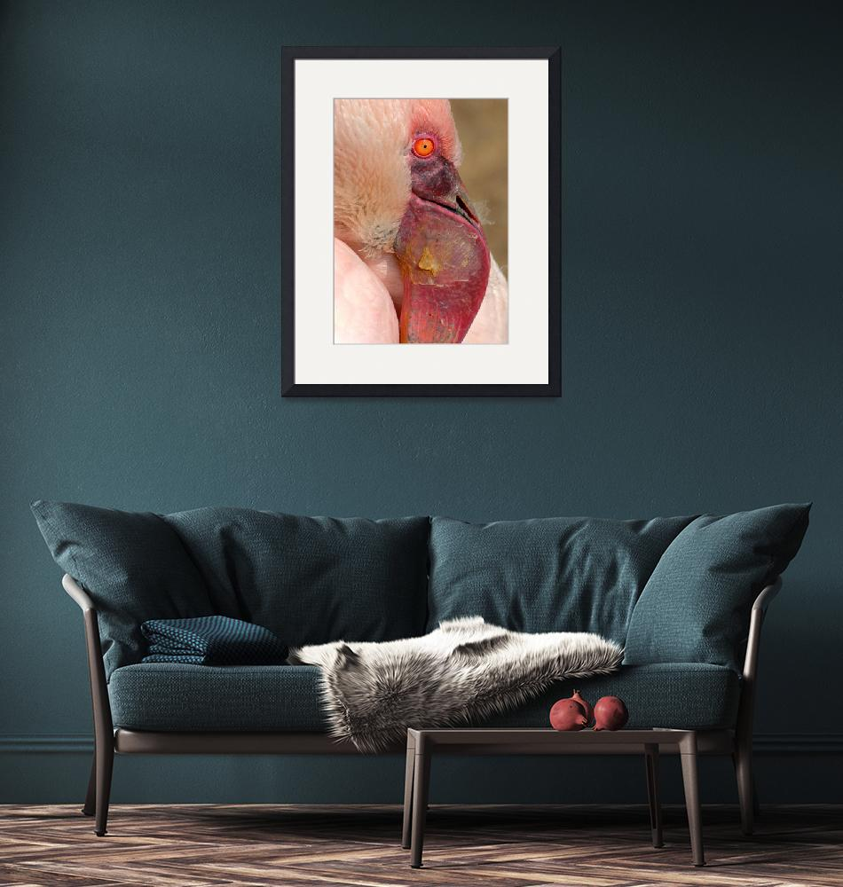 """""""Flamingo""""  (2009) by grugster"""