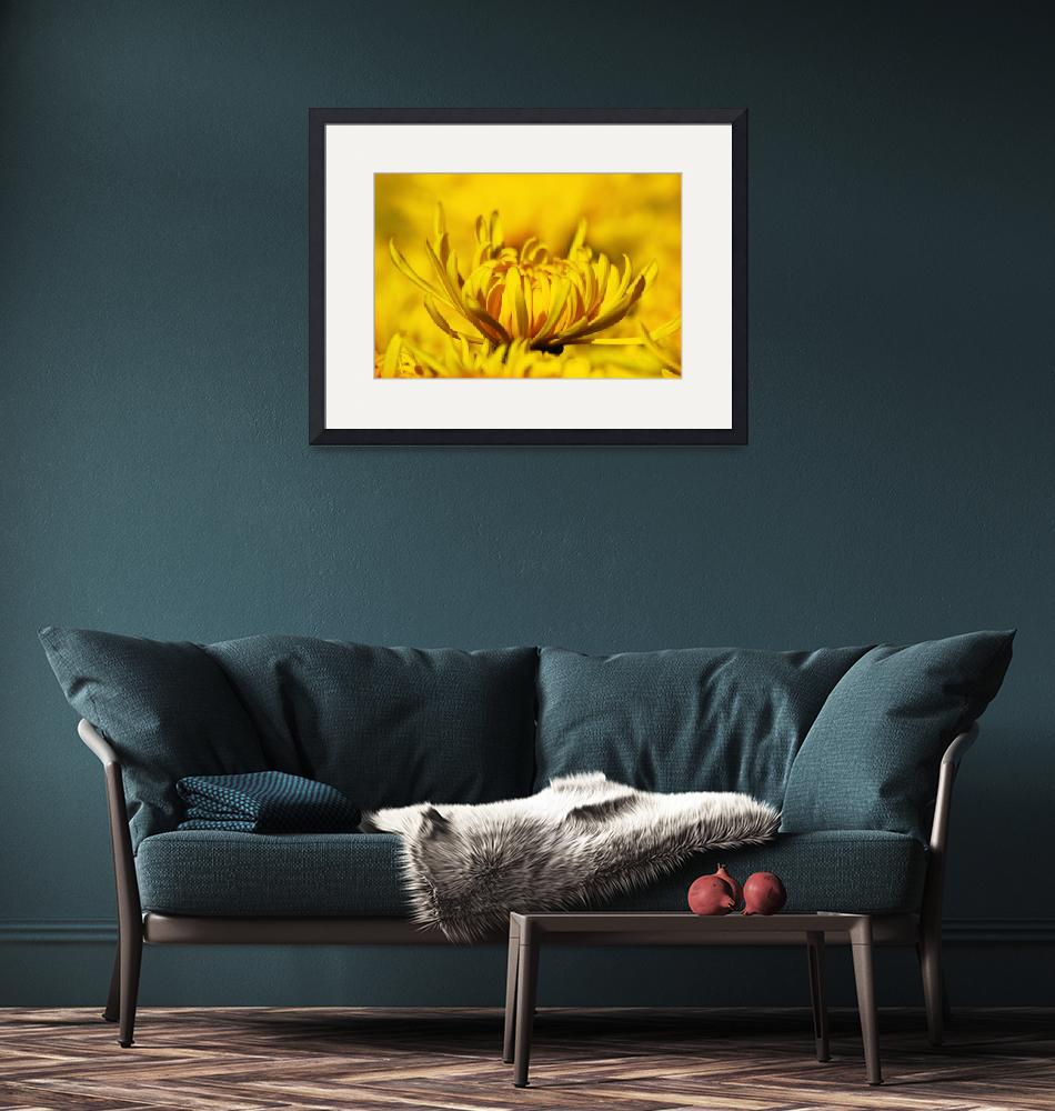 """""""Yellow Flower in closeup""""  (2012) by charker"""