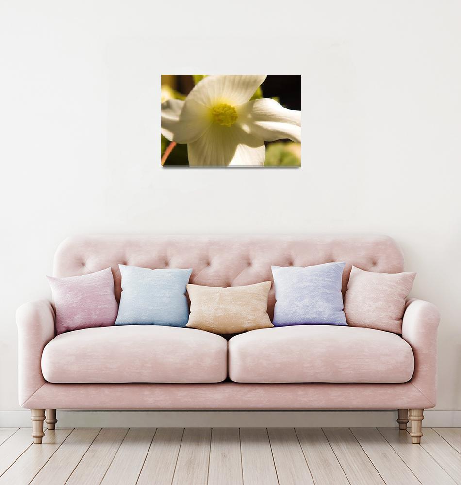 """Flower""  by davidwheeldon"