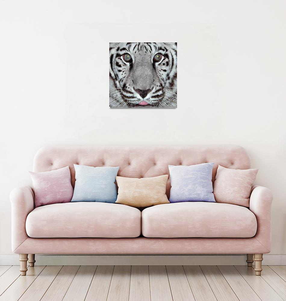 """""""White Tiger""""  by toots"""