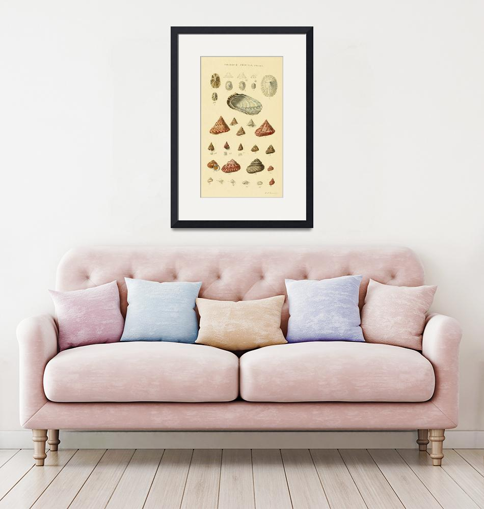 """Vintage Snail Shell Drawings""  by Alleycatshirts"