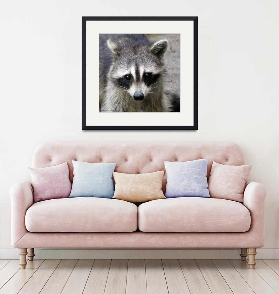 """""""Portrait of a Raccoon""""  (2019) by Kimmary"""