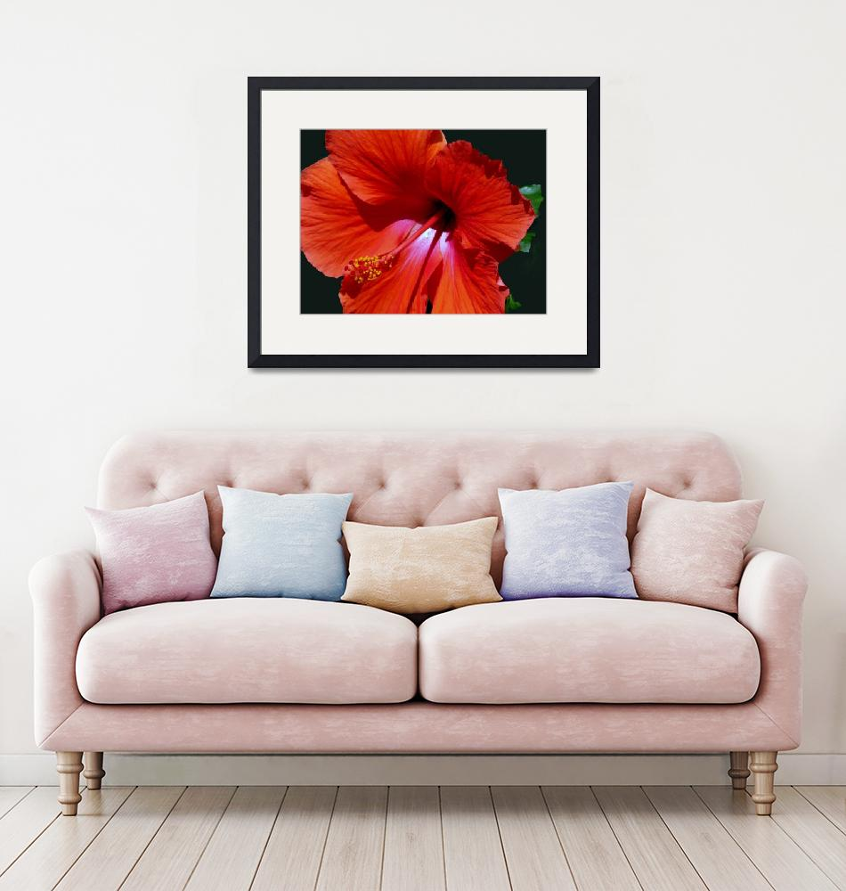 """Hibiscus Floret Flower""  by PhotoFitness"