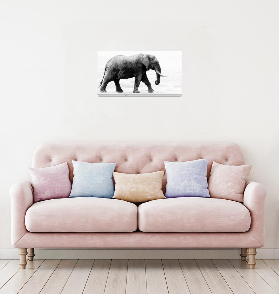 """""""Elephant""""  (2010) by mballabphotos"""