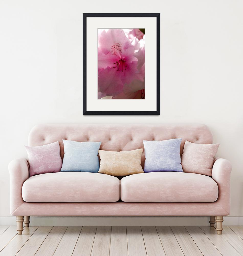 """""""Rhododendron 1""""  (2010) by MindsEyeImagery"""