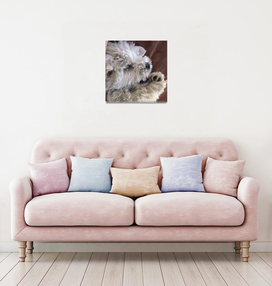 """""""West Highland White Terrier Puppy""""  (2008) by Westie"""
