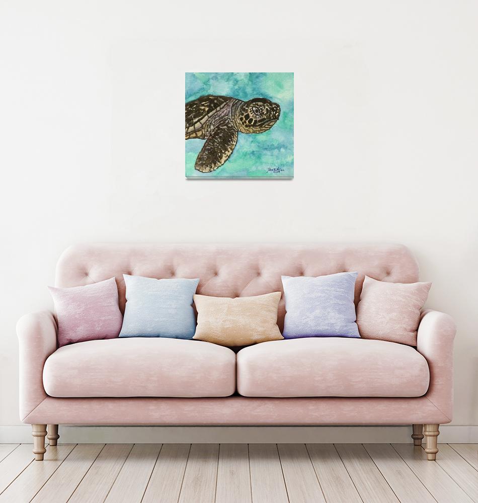 """""""baby sea turtle""""  (2010) by derekmccrea"""