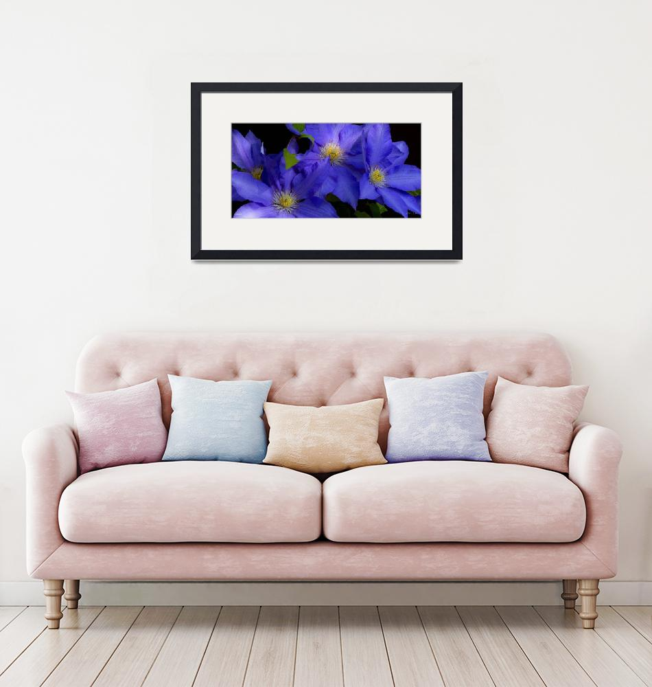 """""""F292-2 Panorama Clematis 30X60 309 megs""""  (2019) by Williamcastner"""