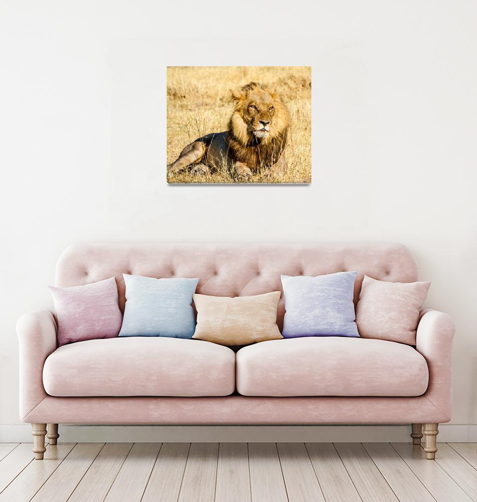 """""""African Male Lion""""  (2016) by mjphoto-graphics"""