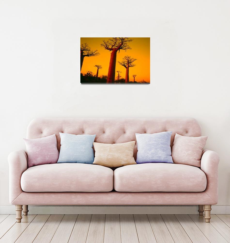 """Sunset on the baobab trees""  by anthonyasael"