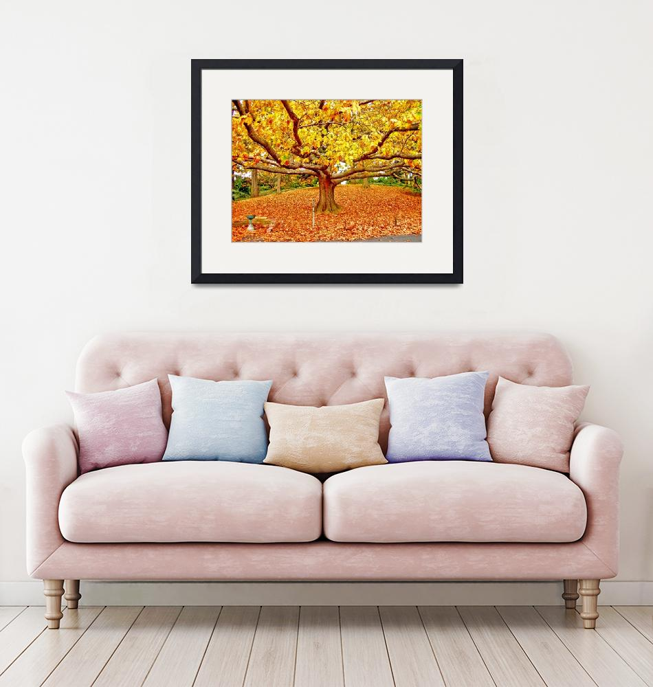 """""""Golden Tree of Autumn""""  (2007) by New-Yorkled"""