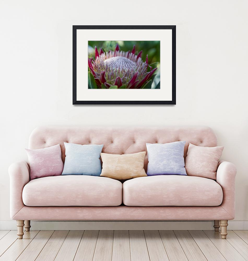 """King Protea Island Flowers Jewel of the Garden""  (2015) by sharonmau"